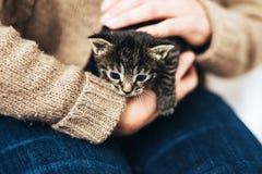 Mann, der ein kleines kleines Kätzchen der getigerten Katze hält Lizenzfreie Stockfotos