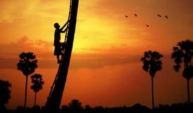 Mann, der einen Arengapalmebaum klettert Lizenzfreies Stockfoto
