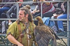 Mann, der einen ausgebildeten Adler anhält Stockbild