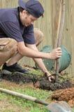 Mann, der einen Baum pflanzt Stockbild
