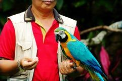 Mann, der einen Papageien anhält Stockbild