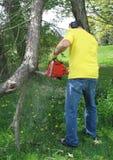 Mann, der einen Zweig mit einer Kettensäge schneidet Stockfotografie