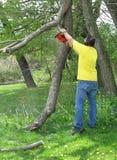 Mann, der einen Zweig mit einer Kettensäge schneidet Lizenzfreies Stockbild