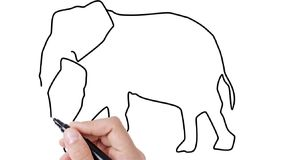 Mann, der Elefanten auf whiteboard Hintergrund skizziert stock video footage