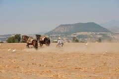 Mann, der Feld mit Pferden pflügt Lizenzfreie Stockbilder