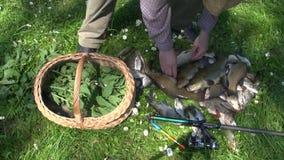 Mann, der frisch gefangene Fische in Weidenkorb legt stock footage