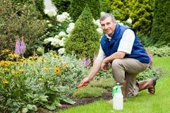 Mann, der Garten harkt