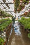 Mann, der am Garten-Speicher wässert Stockfotografie