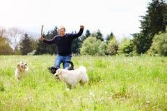 Mann, der Hunde auf Landschafts-Weg ausübt Stockfotografie