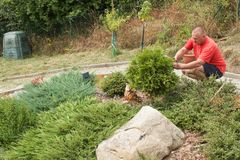 Mann, der im Garten arbeitet Gärtner gleicht Blumen aus Lizenzfreies Stockfoto