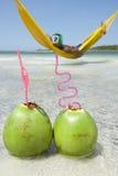 Mann, der im Hängematten-brasilianischen Strand mit Kokosnüssen sich entspannt Stockfotografie