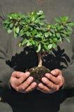 Mann, der kleinen Baum in den Händen anhält Lizenzfreie Stockfotos