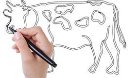 Mann, der Kuh auf whiteboard Hintergrund skizziert stock footage