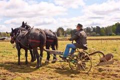 Mann, der mit Entwurfs-Pferden pflügt Stockbilder