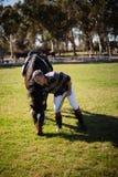 Mann, der mit Pferd in der Ranch steht lizenzfreies stockbild