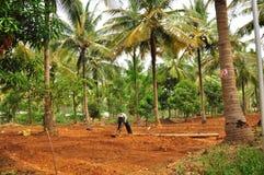 Mann, der an organischem tropischem Bauernhof arbeitet Lizenzfreie Stockfotos