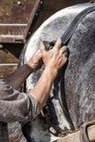 Mann, der Pferd für das Arbeiten vorbereitet Lizenzfreie Stockfotografie