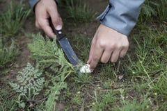 Mann, der Pilze sammelt Lizenzfreies Stockfoto