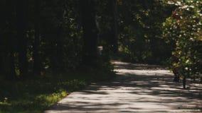 Mann in der roten Sportklage fährt Fahrrad entlang einer Asphaltstraße in einem Wald stock video