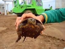 Mann der Schildkröte in der Hand stockfoto