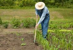 Mann, der in seinem Garten arbeitet stockbild