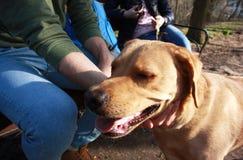 Mann, der seinen Hund während des Wegs im Park streichelt lizenzfreies stockbild