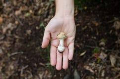 Mann, der in seinen Palmenpilzen - Herbstszene von Europa hält lizenzfreie stockfotos