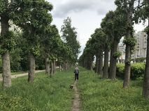 Mann, der in Stadtwald mit Hund geht Stockbilder