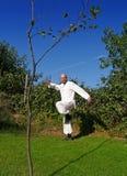 Mann, der Tai-Chi im Park tut Lizenzfreies Stockbild