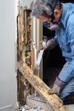 Mann, der Termite schädigendes Holz von der Wand entfernt Stockfotografie