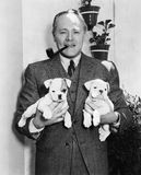 Mann, der zwei englische Bulldoggenwelpen hält (alle dargestellten Personen sind nicht längeres lebendes und kein Zustand existie stockfoto