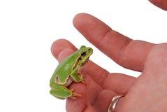Mann des Frosches an Hand Lizenzfreies Stockbild