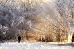 Mann in einem gefrorenen Wald mit Sonne rays Lizenzfreies Stockfoto