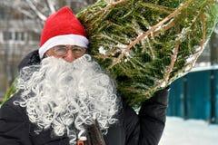 Mann in einem roten Hut und weißen einem Bart Sankt trägt einen Weihnachtsbaum, der in einem Gitter verpackt wird stockfotos