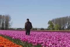Mann in einem Tulpenbauernhof lizenzfreie stockfotografie