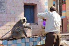 Mann erhält Flasche gefüllt durch Affen Stockbilder
