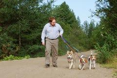Mann-gehende Hunde auf Spur Stockfotos