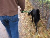 Mann-gehender Hund stockfotos