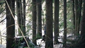 Mann geht durch Snowy-Holz stock video footage