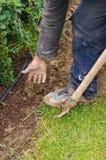 Mann gräbt ein Loch, um einen Baum zu pflanzen stockfotografie