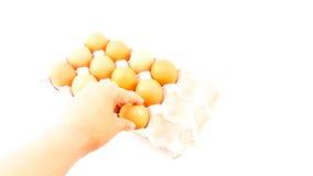 Mann, halten Hühnereien über Eierablage Stockbilder