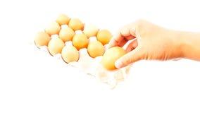 Mann, halten Hühnereien über Eierablage Lizenzfreie Stockbilder