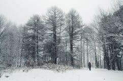 Mann im Kiefernwald im Winter mit Schnee Stockbild
