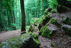 Mann im Moos in einem bezauberten deutschen Wald Lizenzfreie Stockfotografie