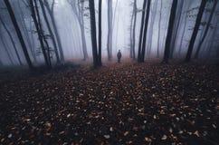 Mann im mysteriösen Wald mit Nebel auf Hallooween Lizenzfreie Stockfotos