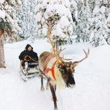 Mann im Ren-Schlitten im Schnee Forest Rovaniemi Finland Lapland lizenzfreie stockfotografie