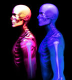 Mann-Knochen 28 Stockfotos