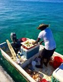 Mann macht Tritonshorn-Salat vom Boot lizenzfreie stockbilder