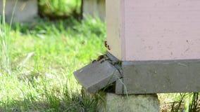 Mann machte Bienen-Bienenstock stock video footage