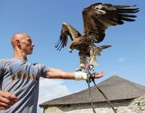 Mann mit Adler Stockfotos